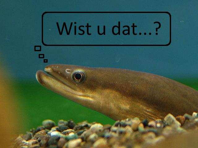 feiten paling